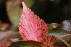 Μοναδικό σχέδιο του ζωηρού ροζ κοραλλιών με το καφετί φύλλο φυτού έμφασης τροπικό Στοκ Εικόνες