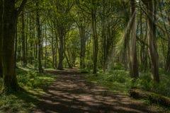 Μονοπάτια που κατατίθενται όμορφα από Bluebells στο πάρκο Fullerton κοντά σε Troon Σκωτία στοκ φωτογραφίες