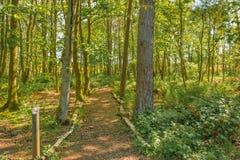 Μονοπάτια του Glen νεράιδων στο πάρκο Fullerton κοντά σε Troon στη Σκωτία στοκ φωτογραφία με δικαίωμα ελεύθερης χρήσης
