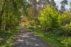 Μονοπάτια του Glen νεράιδων στο πάρκο Fullerton κοντά σε Troon στη Σκωτία στοκ εικόνες