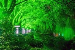 μονοπάτι και πράσινα δέντρα τη νύχτα Στοκ Φωτογραφίες