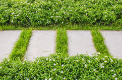 Μονοπάτι και πράσινη χλόη Στοκ Φωτογραφίες