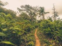 Μονοπάτι μέσα στη ζούγκλα/ίχνος ρύπου στο δασικό τοπίο Στοκ Εικόνες