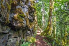 Μονοπάτι μέσω του δάσους στοκ εικόνες