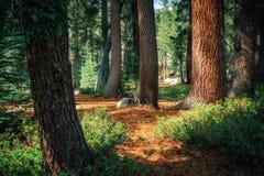 Μονοπάτι μέσω του δάσους Στοκ εικόνα με δικαίωμα ελεύθερης χρήσης