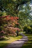Μονοπάτι μέσω του δάσους φθινοπώρου Στοκ φωτογραφίες με δικαίωμα ελεύθερης χρήσης