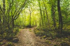 Μονοπάτι μέσω του δάσους Στοκ Φωτογραφίες