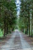 Μονοπάτι μέσω των δασών Στοκ Εικόνες