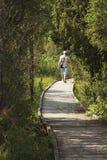 Μονοπάτι μέσω των δασών Στοκ φωτογραφίες με δικαίωμα ελεύθερης χρήσης