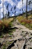 Μονοπάτι μέσω των δασών Στοκ Εικόνα