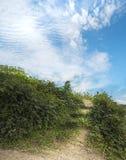 Μονοπάτι με τα φυσικά σε τρία στάδια σκαλοπάτια σαν ως μεγάλο ευρύ μπλε ουρανό είναι προορισμός Πράσινος θάμνος στην πλευρά του ί στοκ εικόνες με δικαίωμα ελεύθερης χρήσης