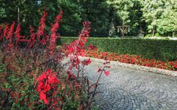 Μονοπάτι με τα flowery σύνορα στο παραμύθι δασικό Efteling Στοκ εικόνες με δικαίωμα ελεύθερης χρήσης