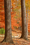 Μονοπάτι πτώσης που πλαισιώνεται από δύο κορμούς δέντρων Στοκ φωτογραφία με δικαίωμα ελεύθερης χρήσης