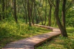 Μονοπάτι στα δάση Στοκ Εικόνες
