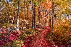 Μονοπάτι στα δάση Στοκ φωτογραφία με δικαίωμα ελεύθερης χρήσης
