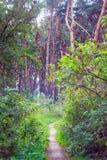 Μονοπάτι στα δάση Στοκ Εικόνα