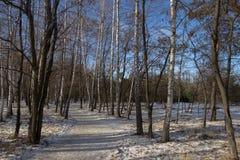 Μονοπάτι στα δάση Στοκ εικόνες με δικαίωμα ελεύθερης χρήσης