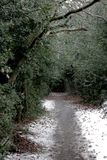 Μονοπάτι στα χειμερινά ξύλα με το ελαφριούς χιόνι και τον ελαιόπρινο στοκ φωτογραφία