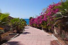 Μονοπάτι στην παραλία Tenerife στο νησί - καναρίνι Στοκ φωτογραφία με δικαίωμα ελεύθερης χρήσης