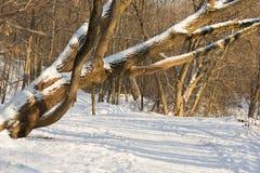 μονοπάτι στο δάσος Στοκ Εικόνα