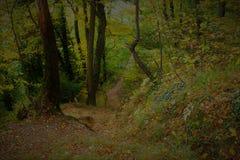 μονοπάτι στο δάσος Στοκ Εικόνες