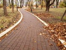 Μονοπάτι στο πάρκο το φθινόπωρο Στοκ Εικόνες