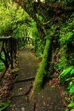 Μονοπάτι στο πράσινο τροπικό δασικό ίχνος στους κήπους καταρρακτών Λα Παζ, με το πράσινο τροπικό δάσος στη Κόστα Ρίκα Τροπικός κύ Στοκ φωτογραφίες με δικαίωμα ελεύθερης χρήσης