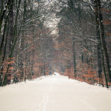 Μονοπάτι στο χειμερινό δάσος Στοκ εικόνα με δικαίωμα ελεύθερης χρήσης