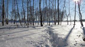 Μονοπάτι στο χιόνι στοκ φωτογραφία