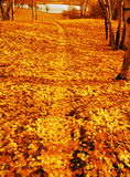 μονοπάτι φθινοπώρου Στοκ εικόνα με δικαίωμα ελεύθερης χρήσης