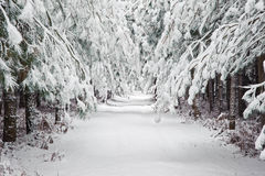 Μονοπάτι χειμερινού χιονιού μέσω του δάσους στοκ φωτογραφίες