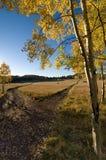 μονοπάτι δικράνων Στοκ φωτογραφίες με δικαίωμα ελεύθερης χρήσης