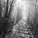 Μονοχρωματική εικόνα της υγρής πορείας πετρών στο Forest Park Zhangjiajie Στοκ εικόνα με δικαίωμα ελεύθερης χρήσης