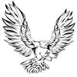Μονοχρωματικός αετός κατά τη διάρκεια της προσγείωσης Στοκ εικόνες με δικαίωμα ελεύθερης χρήσης