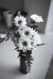 Μονοχρωματικός στενός επάνω πυροβολισμός του κεφαλιού λουλουδιών στοκ εικόνες με δικαίωμα ελεύθερης χρήσης