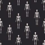 Μονοχρωματικό άνευ ραφής σχέδιο με τους ρεαλιστικούς σκελετούς στο μαύρο υπόβαθρο Ανατομικό σκηνικό με το ανθρώπινο σκελετικό σύσ διανυσματική απεικόνιση