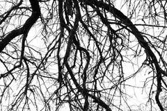 μονοχρωματικό δέντρο κλάδων Στοκ Εικόνα
