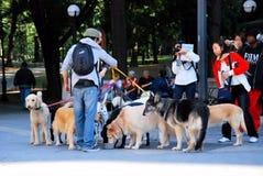 μοντέλο ζωγράφου σκυλιών Στοκ Φωτογραφίες
