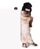 Μοντέρνη γάτα πίσω από ένα έμβλημα Στοκ Φωτογραφίες