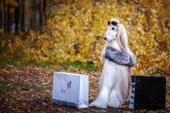 Μοντέρνος, σκυλί, μοντέρνη γυναίκα στοκ φωτογραφίες
