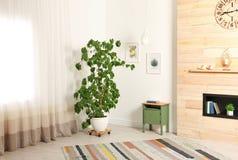 Μοντέρνο εσωτερικό δωματίων με μεγάλο houseplant στοκ εικόνες με δικαίωμα ελεύθερης χρήσης