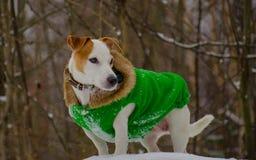 Μοντέρνο παλτό σκυλιών Στοκ φωτογραφία με δικαίωμα ελεύθερης χρήσης
