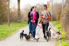 Μοντέλα ζωγράφου σκυλιών που περπατούν τους πελάτες τους στοκ εικόνες
