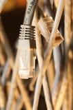 Μονωμένα σκοινιά στοκ φωτογραφία