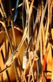 Μονωμένα σκοινιά στοκ εικόνα με δικαίωμα ελεύθερης χρήσης