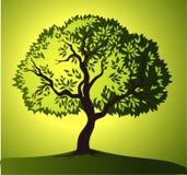μοριακό δέντρο σκηνής ελιών νύχτας EL Μαδρίτη πράσινο διάνυσμα δέντρων κιτρινοπράσινα φύλλα Στοκ Φωτογραφίες