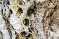 μοριακό δέντρο σκηνής ελιών νύχτας EL Μαδρίτη Στοκ Εικόνα