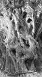 μοριακό δέντρο σκηνής ελιών νύχτας EL Μαδρίτη Στοκ φωτογραφία με δικαίωμα ελεύθερης χρήσης