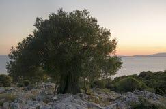 μοριακό δέντρο σκηνής ελιών νύχτας EL Μαδρίτη Στοκ εικόνες με δικαίωμα ελεύθερης χρήσης