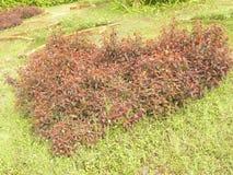 Μορφή καρδιών topiary στοκ φωτογραφία με δικαίωμα ελεύθερης χρήσης